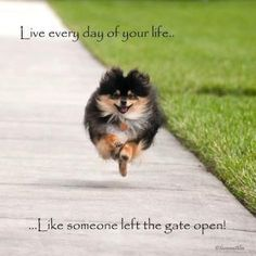 haha reminds me of my pomeranian - they do run like SOMEONE LEFT THE GATE OPEN!!!