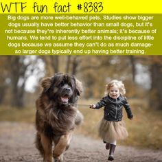 why big dogs are more well behaved wtf fun Wtf Fun Facts, Funny Facts, Funny Memes, Random Facts, Movie Facts, Crazy Facts, Little Dogs, Big Dogs, Small Dogs
