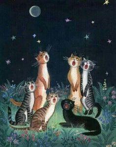 Katte besaar