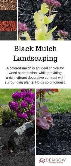 Black coloured Mulch is a colored mulch is an ideal choice for weed suppression, while providing a rich, vibrant decorative contrast with surrounding plants. Holds colour longest. Learn more about garden landscaping with Black Mulch - https://www.denbow.com/products/mulch/