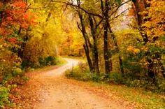 Leaf Peeping on a Leaf Covered Road