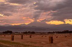 Harvest Sunset Longm