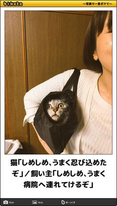 画像 Animals And Pets, Funny, Humor, Cat Breeds, Pets, Funny Parenting, Hilarious, Fun
