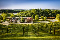 Vineyards along the Missouri River in Hermann Missouri by Notley Hawkins Photography. Taken with a Canon EOS 5D Mark III camera with a Canon EF16-35mm f/4L IS USM lens at ƒ/8.0 with a 1/25 second exposure at ISO 100. Processed with Adobe Lightroom 5.7 and DXO OpticsPro 10.  http://www.notleyhawkins.com/