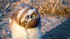 Google Image Result for http://files.tested.com/photos/2013/02/01/44394-owl_head.jpg