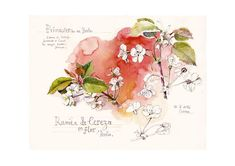 Blossom cherry, Print of Original Floral Watercolor Painting by Catalina