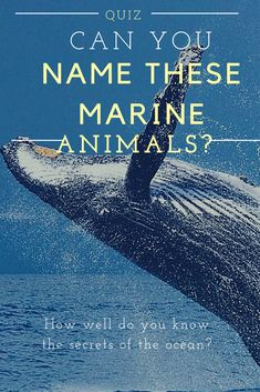 Marine mammals rely on the ocean and other marine ecosystems for their survival - snf d. They include animals such as seals, whales, manatees, sea otters and polar bears. Think you've got what it takes to identify these marine mammals from just a picture? Take a shot at it!