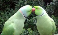 Mamães-pássaro cuidando de seus filhotes   Momentos ternos - TudoPorEmail