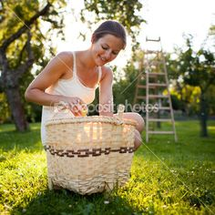 Young woman collecting apples in an orchard — Stock Image #8520685