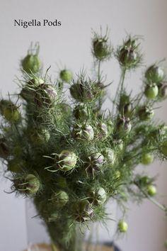 Florabundance - Nigella pods