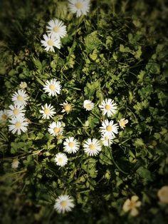 This flower season