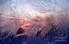 Frost on a Windowpane at Sunrise Photograph - Frost on a Windowpane at Sunrise Fine Art Print - Thomas R Fletcher