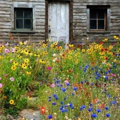 wildflower yard - better than lawn !!!