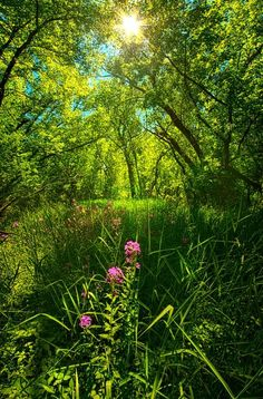 In The Woods (Wisconsin) by Phil Koch / 500px