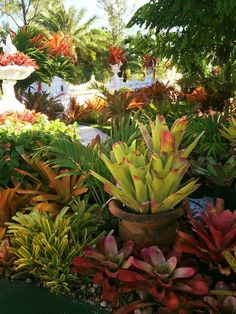 1000 images about shade and indoor plants on pinterest houseplant house plants and conservatory - Indoor plants for shade ...
