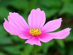 Flower by Orange Leaf, via Flickr