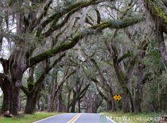 Miccouskee Road- Tallahassee, Florida