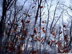 SHOT 6: Winter has set in & the fallen leaves begin to surge with the swirling wind.