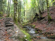 Riachuelo.  La Selva del Irati en Navarra es un entorno natural digno de ser descubierto.  www.casaruralnavarra-urbasaurederra.com  http://nacedero-rio-urederra.blogspot.com.es/