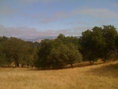 Golden hills of California at Pepperwood Preserve