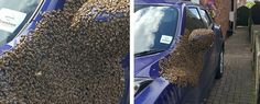 06/15/2017 - Thousands of Bees Took Over a Car in The UK And Beekeepers Are Struggling to Make Them Leave