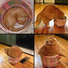 If it fits...,wear it or tear it..