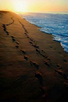 Two sets of Footprints x ;-)