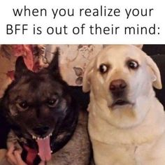 When You Realize Your BFF Is..... - http://www.razmtaz.com/when-you-realize-your-bff-is/