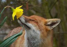 17 Niesamowitych Zdj Zwierzt Wchajcych Kwiaty  Interesujacecom