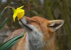 Animais-cheirando-flores-1