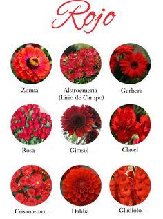 Flores de color rojo. Red flowers.