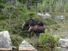 Bucket List: 50 things to do in Maine | Local News - Home (Baxter State Park)