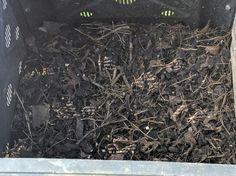 Back yard compost bin