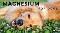 47 Ideas De Veterinaria Veterinaria Perros Mascotas