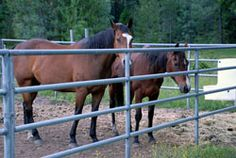 There's ample room in our horse stalls and in our pastures for horse boarding at St. Bernard Lodge. Stay a couple of days and enjoy horseback riding along the trails of historic Lassen Volcanic Park or the Pacific Crest Trail.