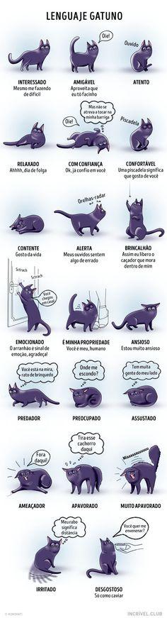 Breve dicionário docomportamento felino