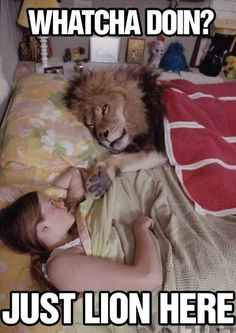 Just lion here