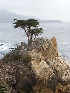 Lone Cypress down the 17 mile Road in Monterey