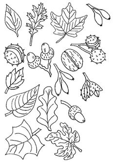 coloring page Trees and leaves on Kids-n-Fun. Coloring pages of Trees and leaves on Kids-n-Fun. More than coloring pages. At Kids-n-Fun you will always find the nicest coloring pages first! Autumn Crafts, Fall Crafts For Kids, Leaf Coloring, Colouring Pages, Autumn Doodles, Bordados E Cia, Bujo Doodles, Pumpkin Crafts, Autumn Activities