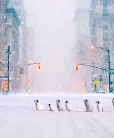 Christmas Scenery, Winter Scenery, Christmas Pictures, Winter Images, Winter Photos, Beautiful Gif, Beautiful Fantasy Art, Gif Noel, Winter Wonderland Wallpaper
