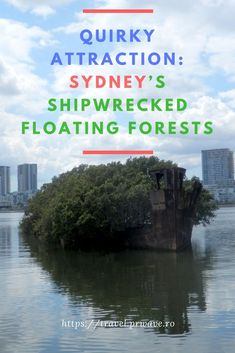 Quirky attraction: Sydney's Shipwrecked Floating Forests, Australia - #unusual #attractions, travel, #Australia, #Sydney, travel curiosities, #Shipwreck