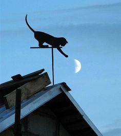 #cat #moon