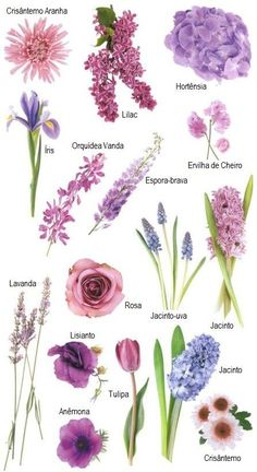 """Have you ever found a picture of a bouquet and wondered, """"What is that flower?"""" Here is a collection of flower names sorted by color. A few bouquet examples are at the bottom and some non-tradi. flowers bouquet pink roses Flower names by Color Purple Wedding Flowers, Colorful Flowers, Beautiful Flowers, Wedding Blue, Wedding Colors, Purple Bouquets, Types Of Purple Flowers, Different Types Of Flowers, Blue Bouquet"""