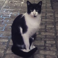 La estatua de Batman. O Batman el gato estatua #catsofinstagram  #cat