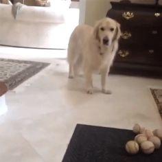 Ce chien qui a essayé de masquer son échec en faisant semblant de s'étirer. | 27 chiens qui ont complètement échoué