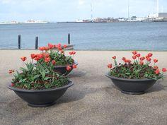 Tulpen in Kopenhagen