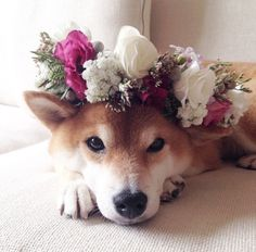 dogs with floral crowns - Google Search