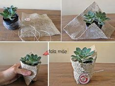 Mini Succulent Favors Gift Ideas 50+ Ideas