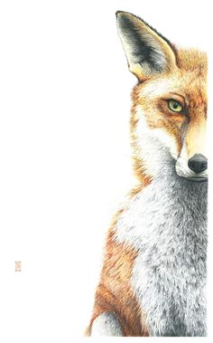 'Interlude with a Fox' - Nikki McIvor 2014 Little Man, Fox, My Arts, Walls, Animals, Inspiration, Ideas, Drawing Pictures, Biblical Inspiration