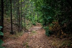 Burok-völgy, Bakonykúti és Királyszállás között Hungary, To Go, Country Roads, Marvel, Places, Lugares